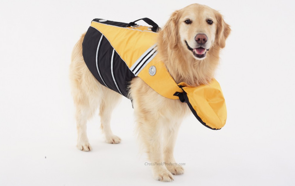 Do dogs need a Life Jacket