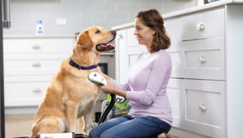 Woman cleaning dog with Barkbath