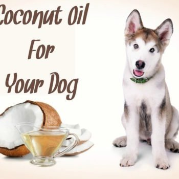 Coconut-Oil-For-Your-Dog (1)