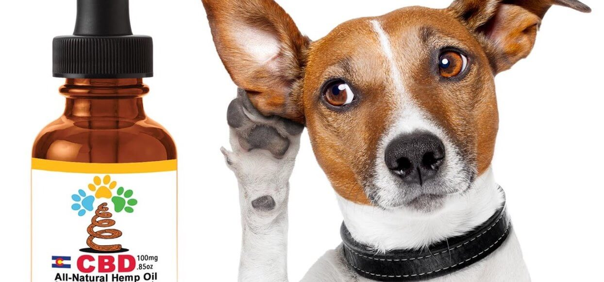 cbd-for-pets-from-thats-natural-dog-with-ear-up-v1