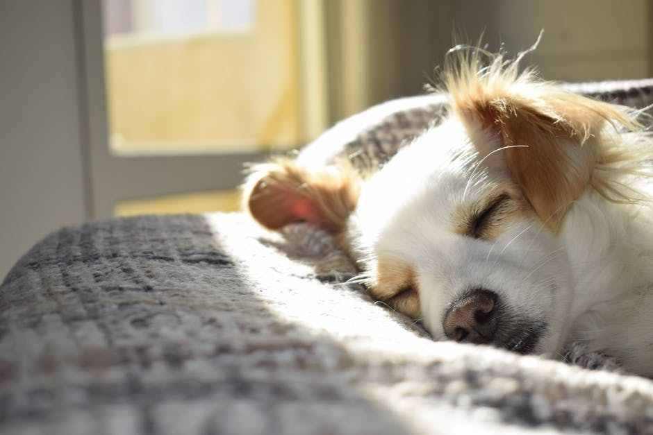 4 Common Sleep Disorders Found in Dogs 2018