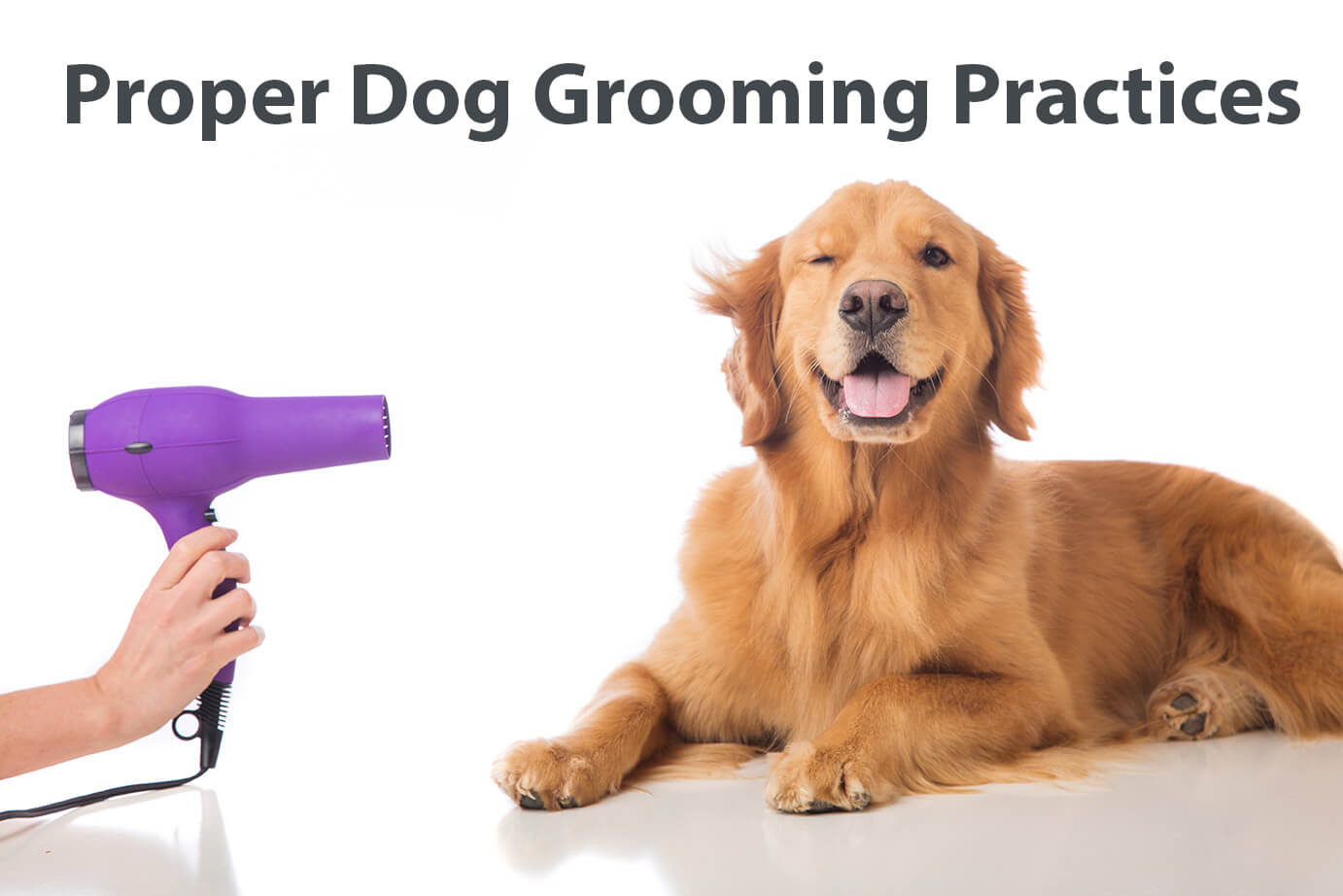 dog grooming practices
