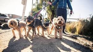 Barkforce Dog Walker