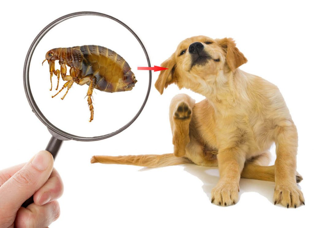 natural flea remedies to try