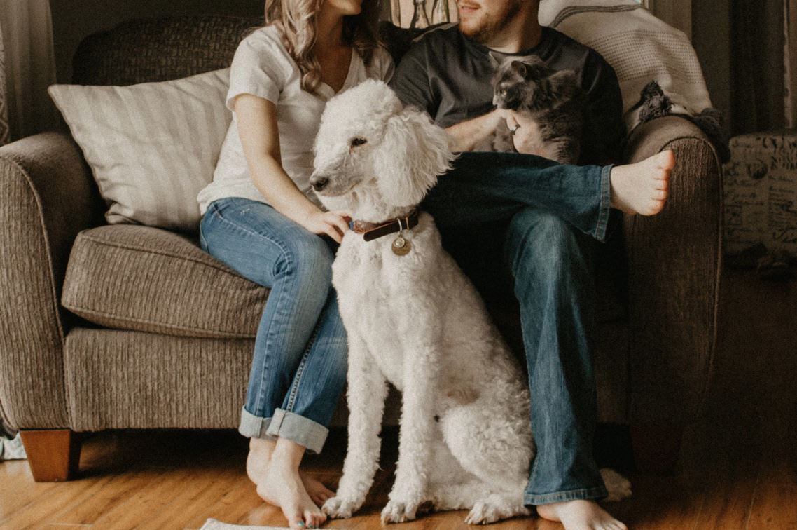 The Purrfect Choice 5 Tips For Picking The Right Vet