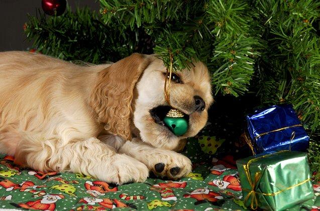 dog-safety-christmas-tree
