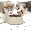 Huskies Eating