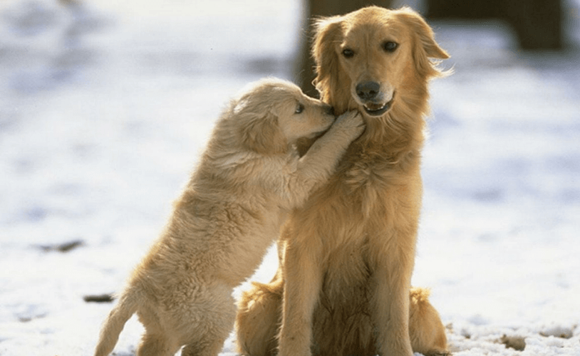 Barkforce Dog Itchy Skin
