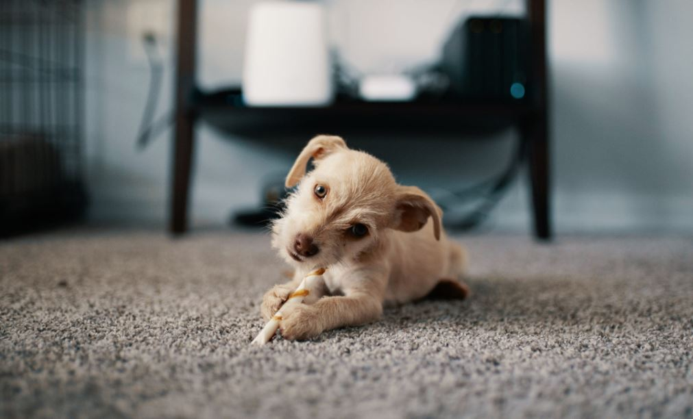 5 Tips Responsible Dog Owners Must Know When Renting a New Apartment