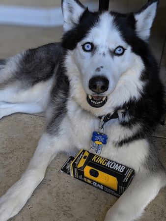 Husky_Loves_Deshedding_Tool