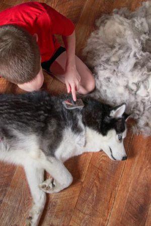 Best Friend Grooming