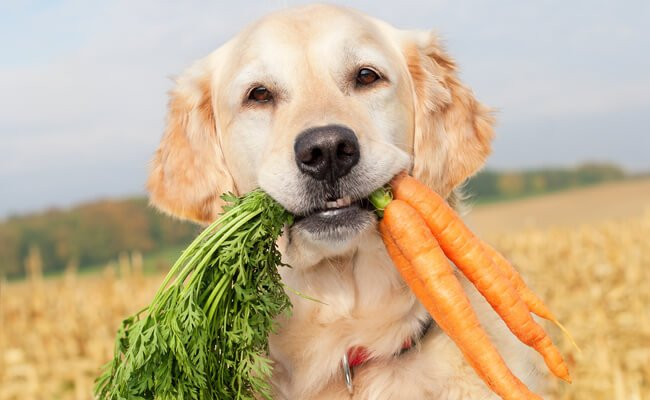 Dog eating carrots and smiling