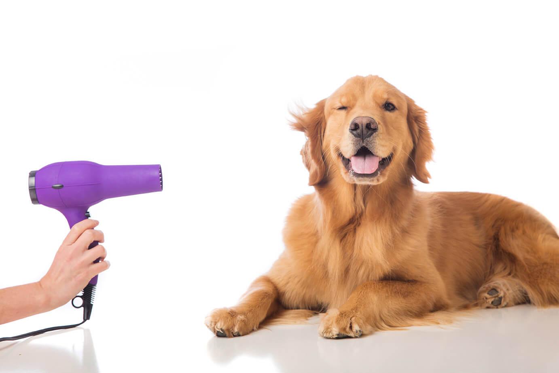 dog-grooming (1)
