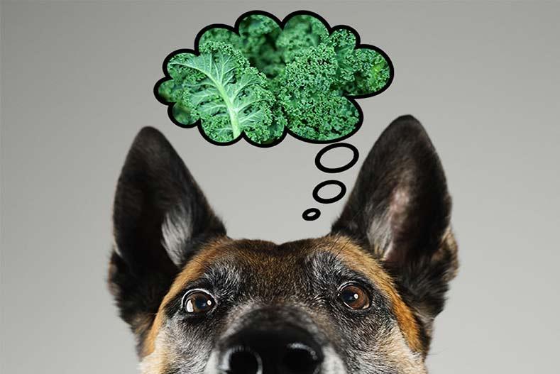 dog eating kale