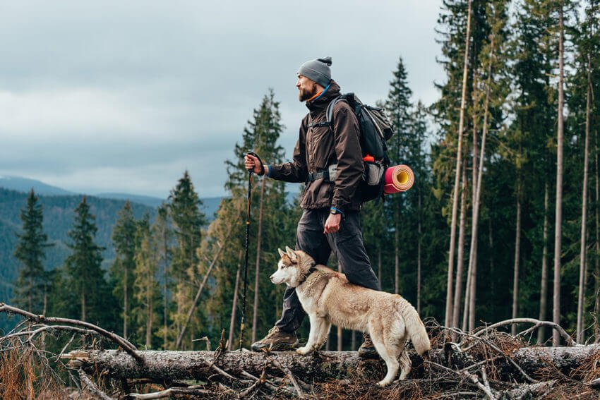 Dog hiking essentials
