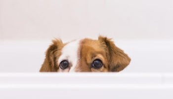 dog-peeking-over-bathtub