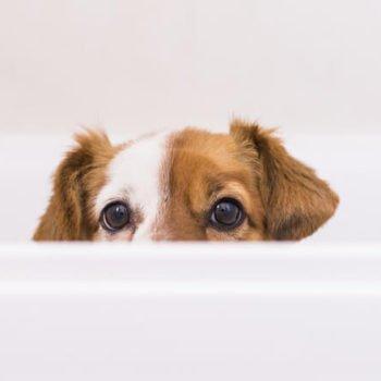 dog-peeking-over-bathtub