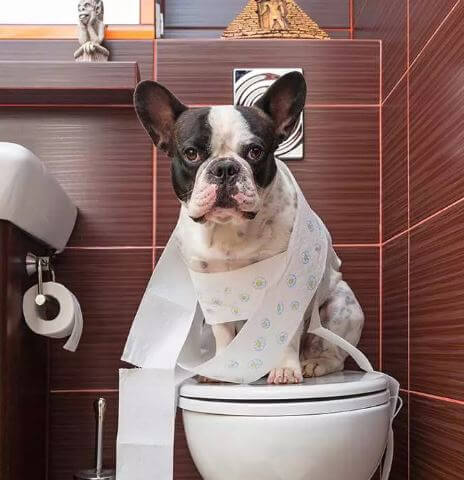 dog using a humans toilet