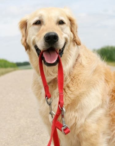 happy dog with a leash