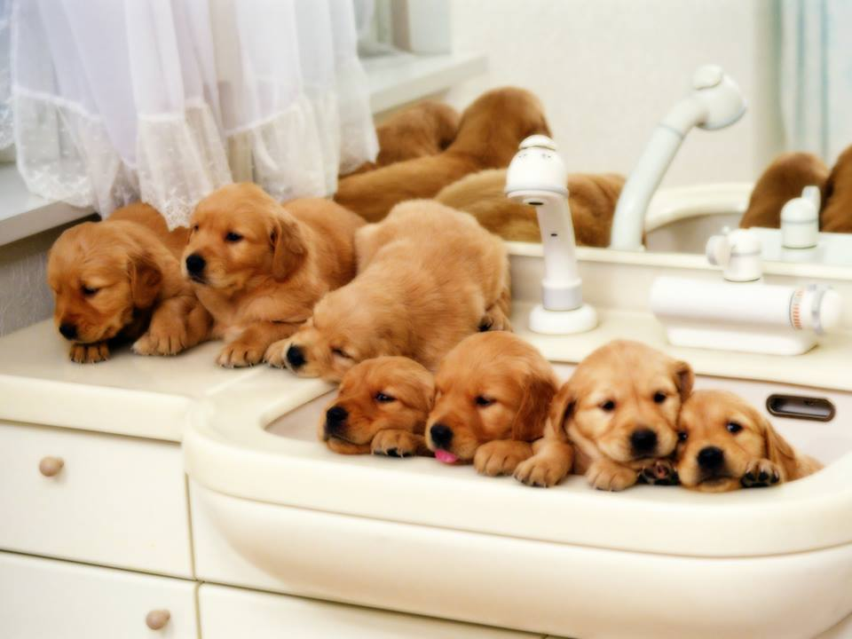 puppy bath time with 7 puppies