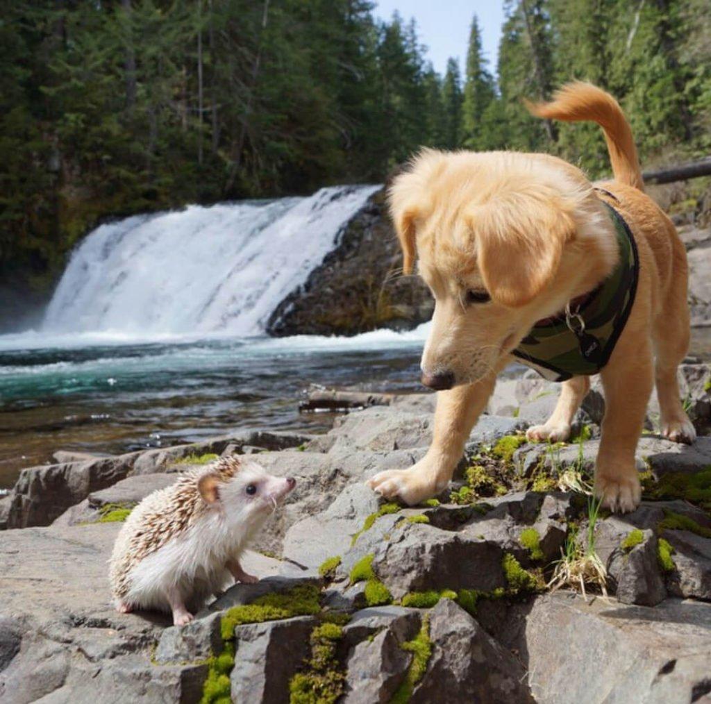 puppy meets hedgehog