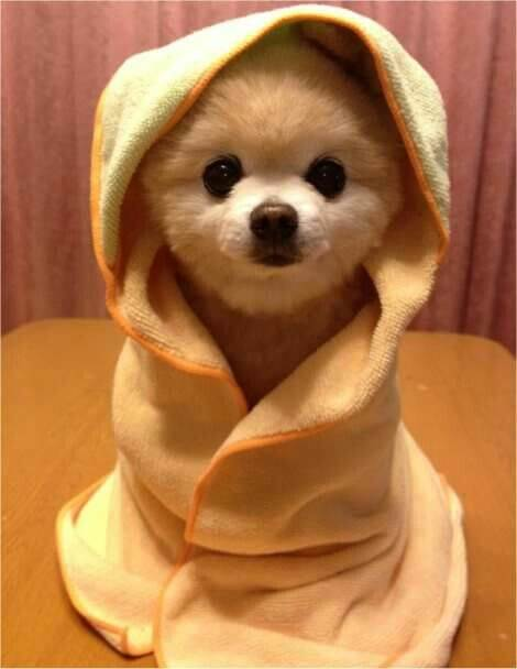 puppy wrapped in a towel
