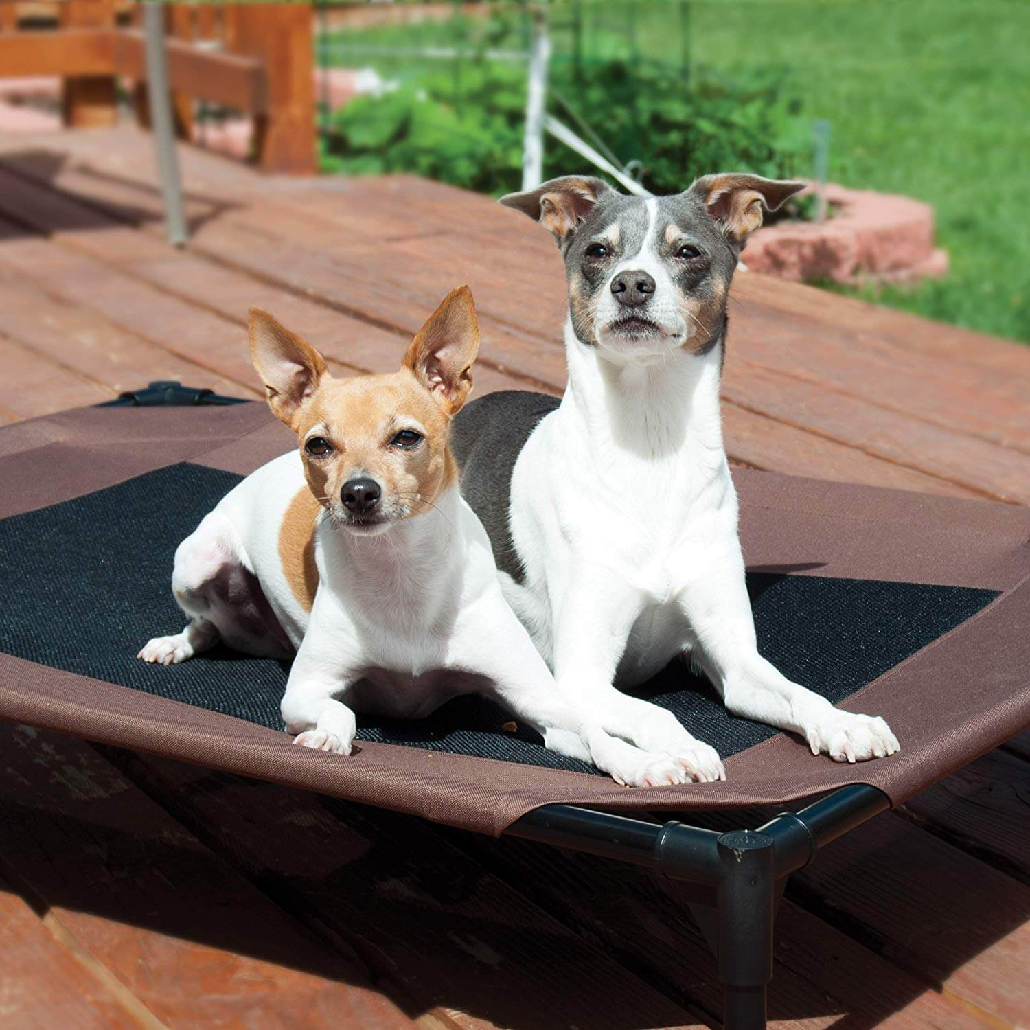 KH Pet Products Original Cot Elevated Pet Bed 2 Dogs Featured
