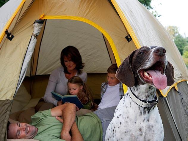 campingfamilydog
