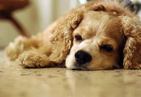 canine arthritis 2