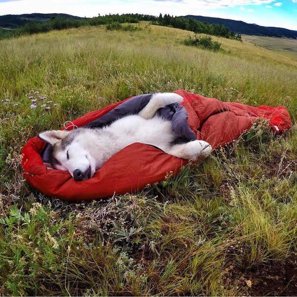 dog camp sleep