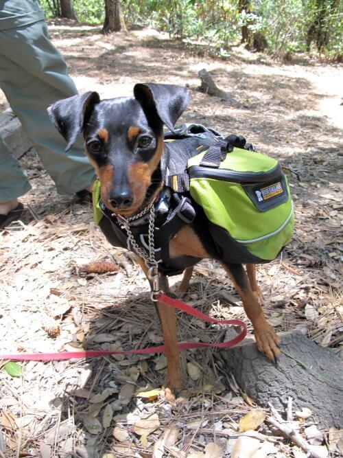 dog in backpack2