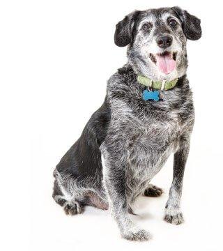 dogseniorcare