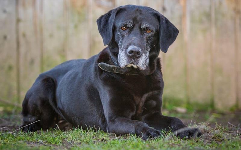 seniordog4