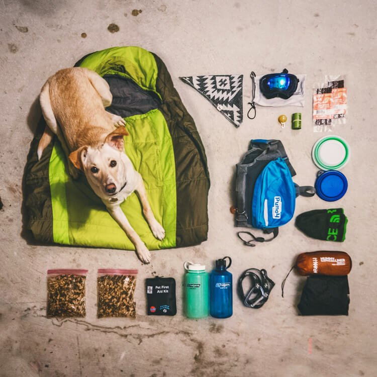 what to pack for camping with your dog