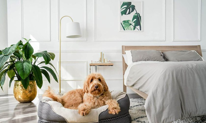 BarksBar Snuggly Sleeper Dog