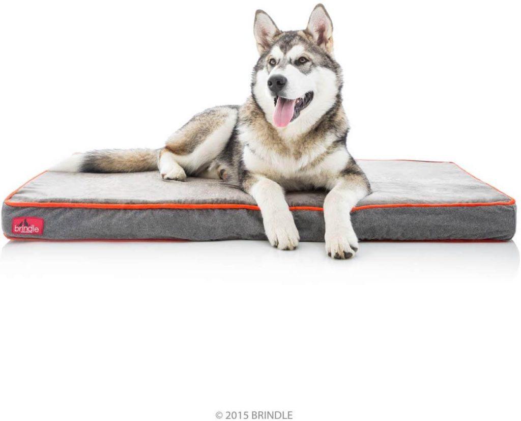 Brindle Waterproof Dog