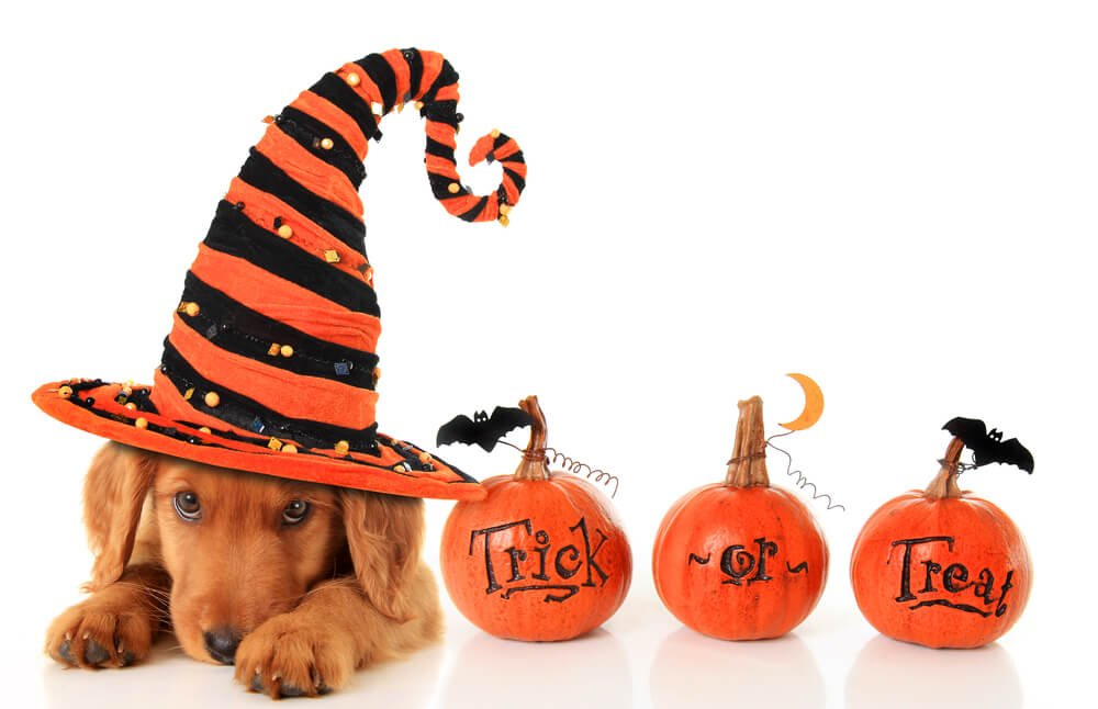 Dog Trick or Treat Pumpkins