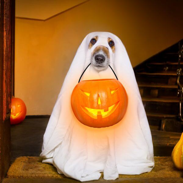 Dog as Ghost