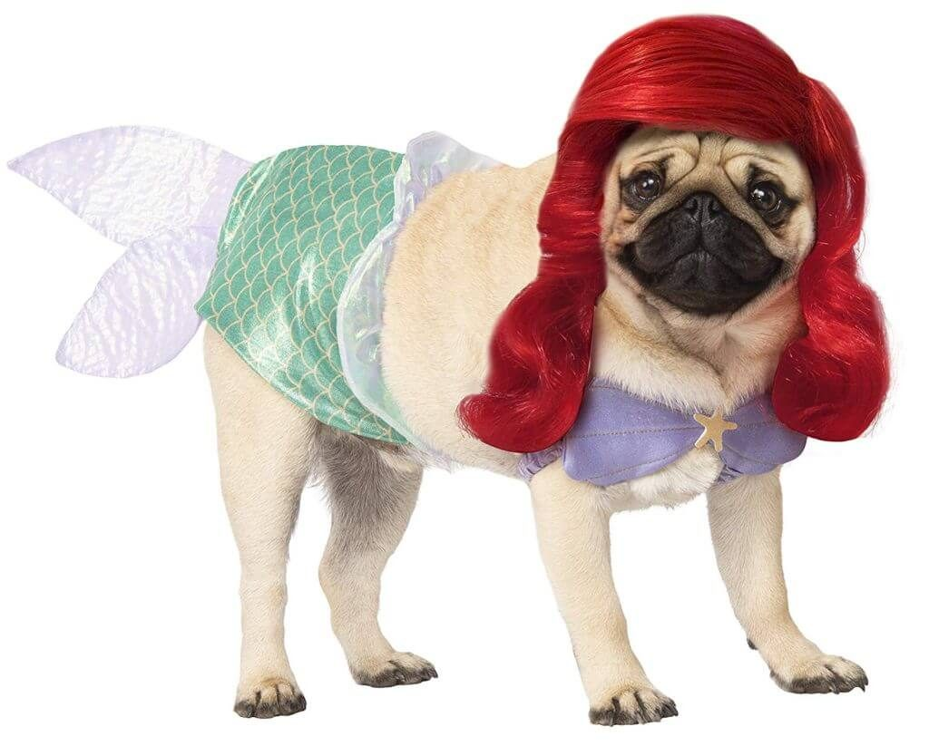 Dog in Mermaid Costume