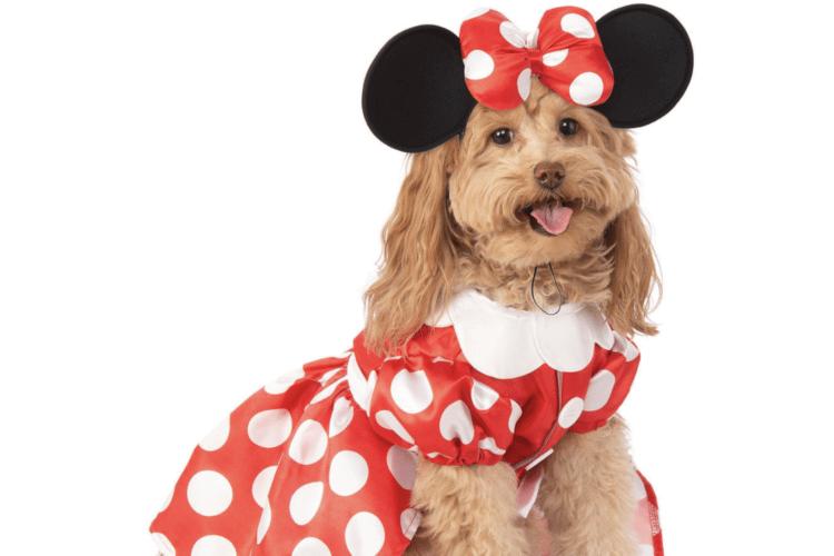 Dog in Minnie Costume