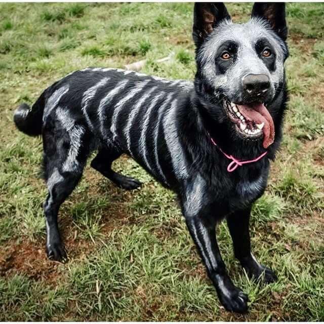 Dog in Skeleton Costume