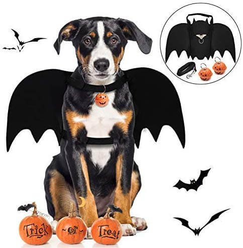 Legendog Dog Bat Wings