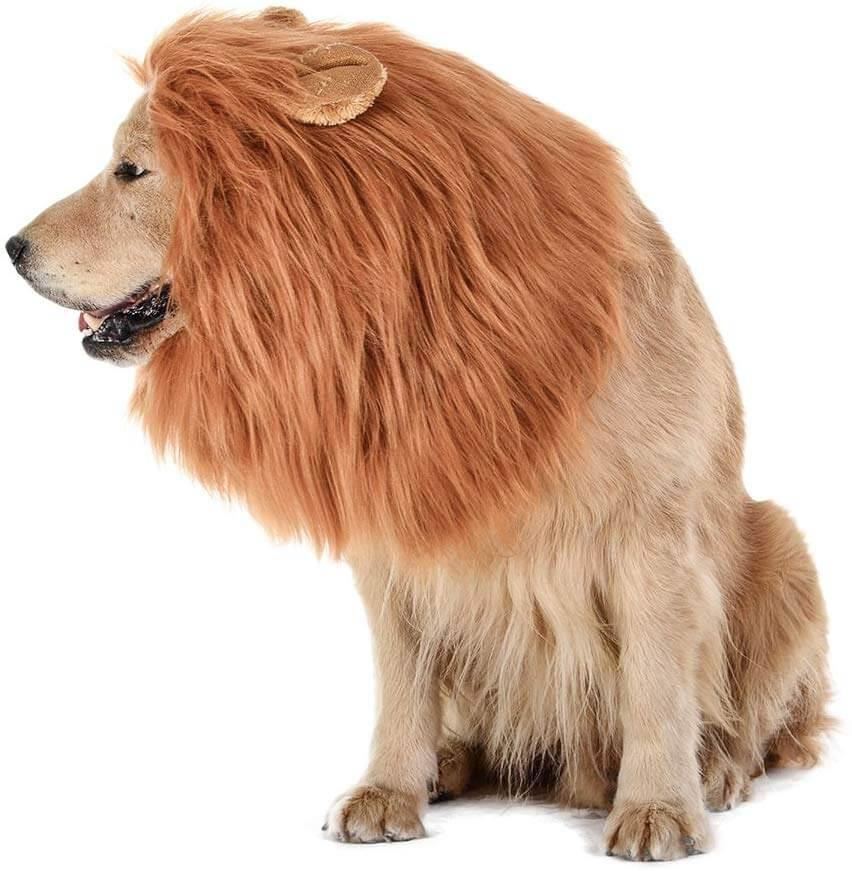 TOMSENN Dog Lion Mane 1