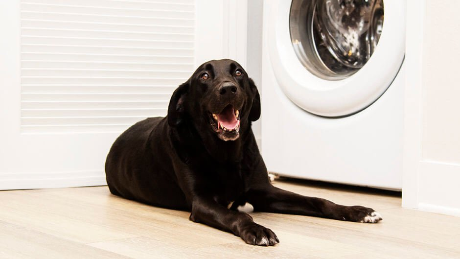 how to clean dog bed
