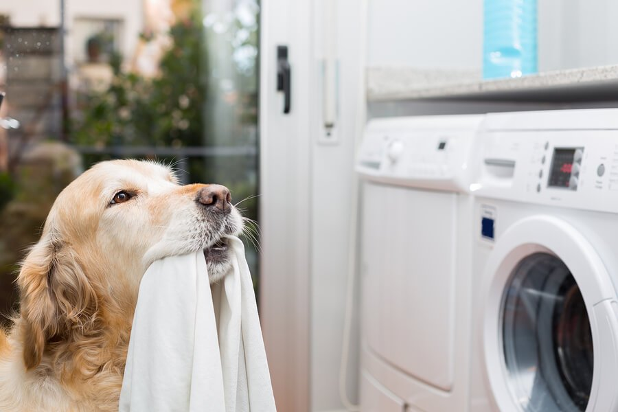 Dog with washer