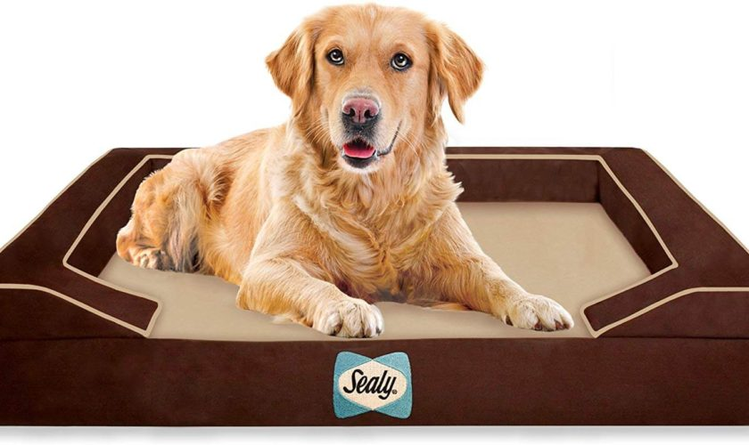 Sealy Lux Quad Layer Large Autumn Brown