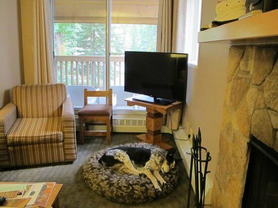 dog bed in living room chair
