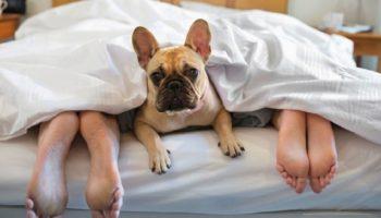 dog under blankets feet