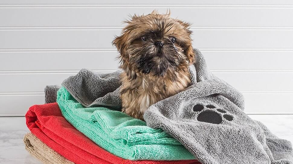 dog with towels
