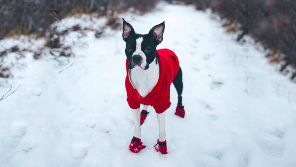Dog Sweater Booties Snow